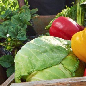 חוג בישול בריא למשפחה